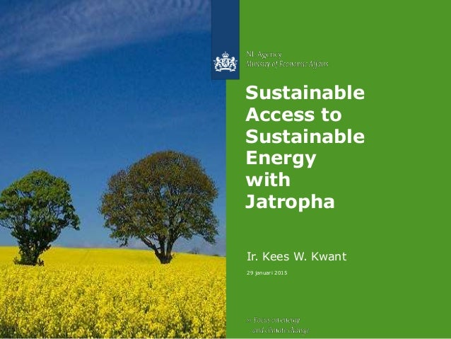 29 januari 2015 Sustainable Access to Sustainable Energy with Jatropha Ir. Kees W. Kwant