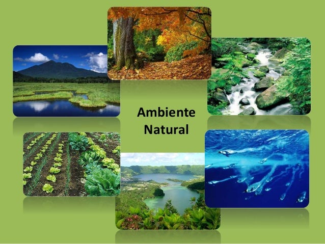 Ambiente  Natural
