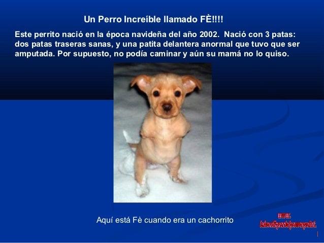 Un Perro Increíble llamado FÈ!!!!Este perrito nació en la época navideña del año 2002. Nació con 3 patas:dos patas trasera...