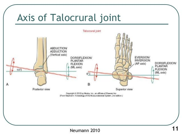 1. Biomechanics of ankle joint subtalar joint and foot
