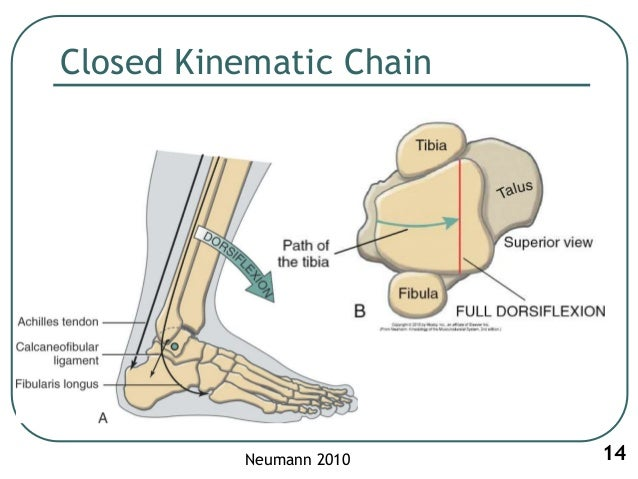 ankle biomechanics Start studying ankle biomechanics learn vocabulary, terms, and more with flashcards, games, and other study tools.