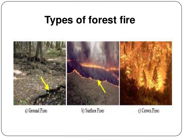 Wireless Sensor Networks Amp Application Forest Fire Detection