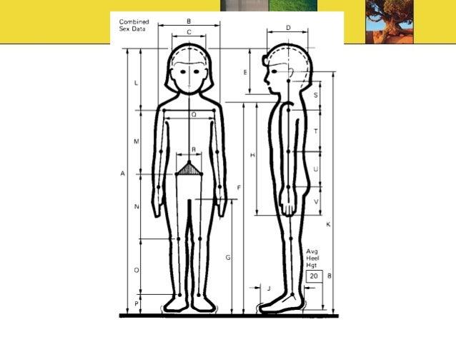 anthropometric measurements in architecture pdf