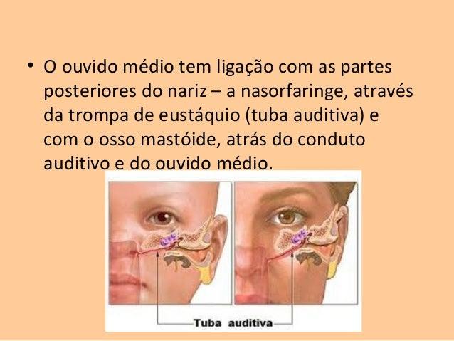 Anátomo Fisiologia Do Ouvido