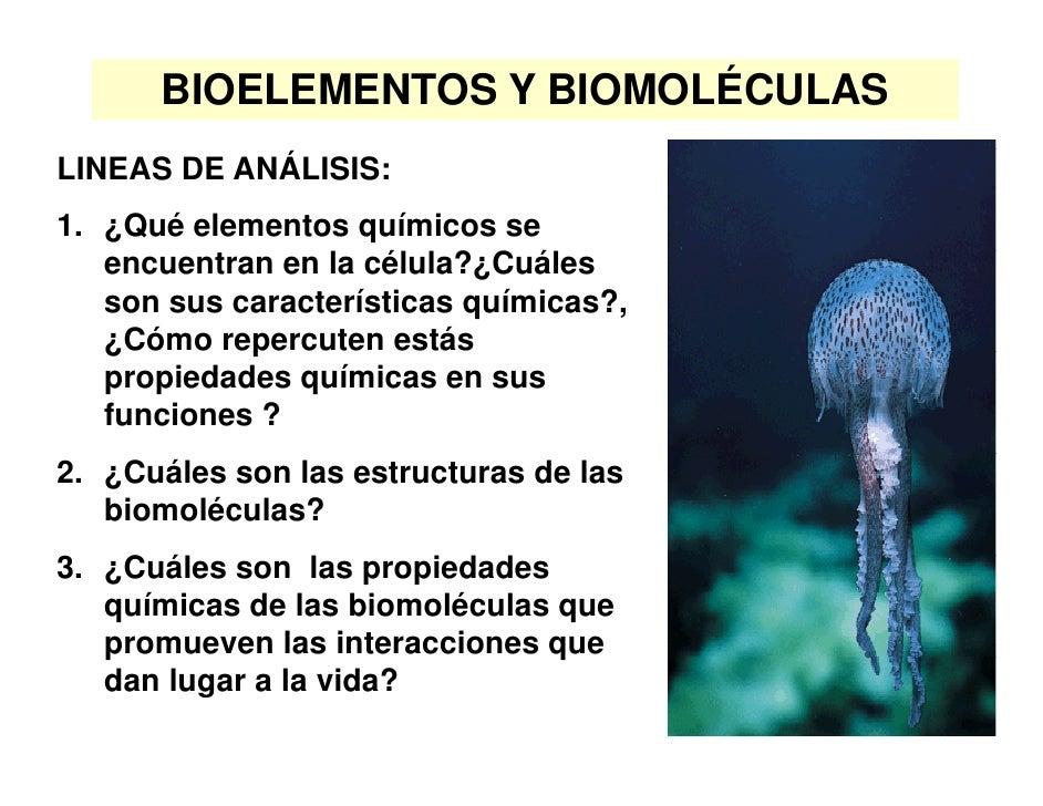 BIOELEMENTOS Y BIOMOLÉCULAS LINEAS DE ANÁLISIS: 1. ¿Qué elementos químicos se    encuentran en la célula?¿Cuáles    son su...