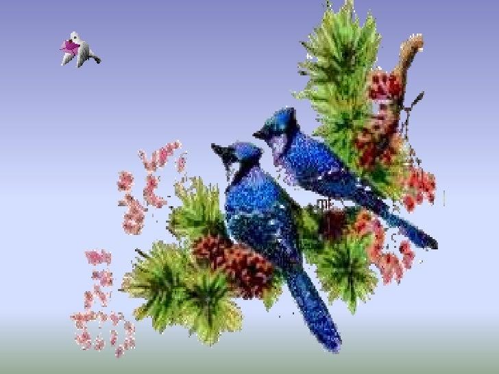 Aves exoticas for Imagenes de jardines exoticos