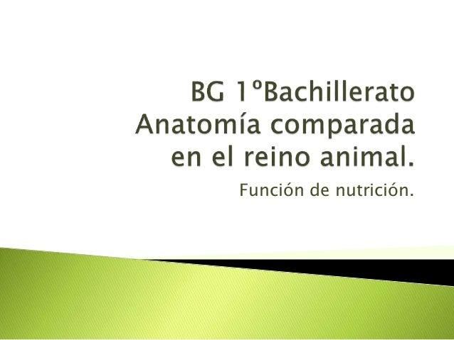 1BACH Anatomía comparada: función de nutrición.