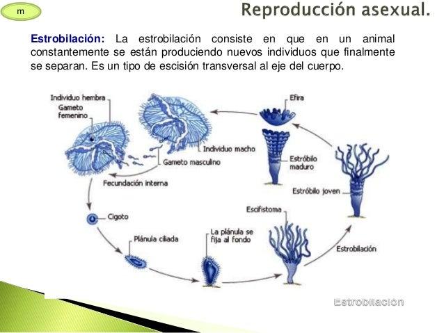 1BACH Anatomía comparada animal. Función de reproducción.