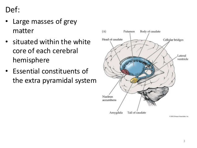 Def:• Large masses of grey matter• ...