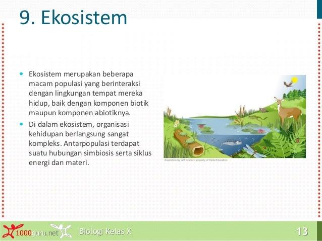 Komunitas Kucing Hutan Indonesia Harimau Sumatera Kucing