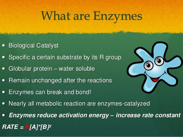 grade 12 biology enzymes Free practice questions for high school biology - understanding enzymes  includes full solutions and score reporting.