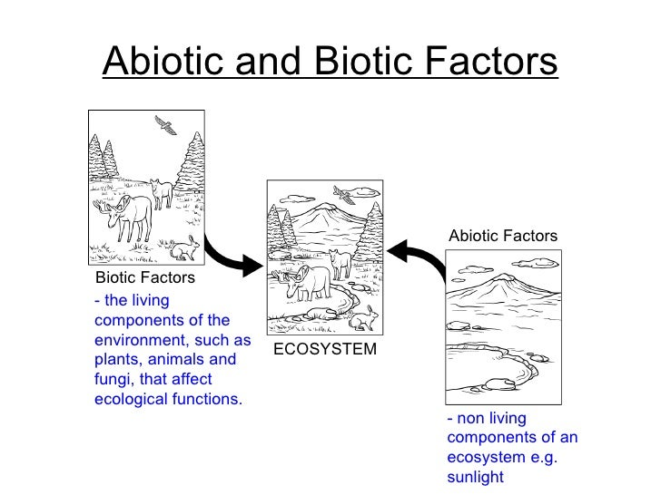 Abiotic vs biotic venn diagram vatozozdevelopment abiotic ccuart Choice Image
