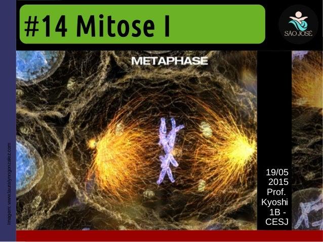 #14 Mitose I 19/05 2015 Prof. Kyoshi 1B - CESJ Imagem:www.lauralynngonzalez.com
