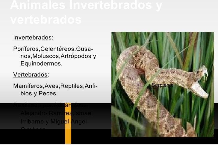 Animales Invertebrados y vertebrados <ul><li>Invertebrados : </li></ul><ul><li>Poríferos,Celentéreos,Gusa-nos,Moluscos,Art...