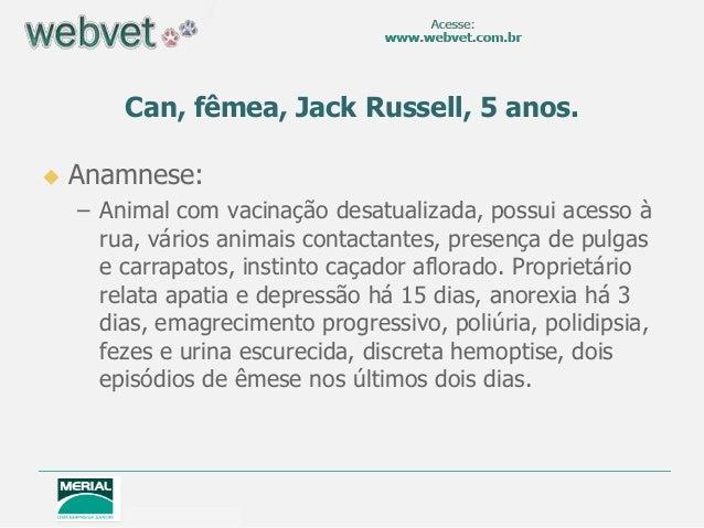 Can, fêmea, Jack Russell, 5 anos.   Anamnese: – Animal com vacinação desatualizada, possui acesso à rua, vários animais c...