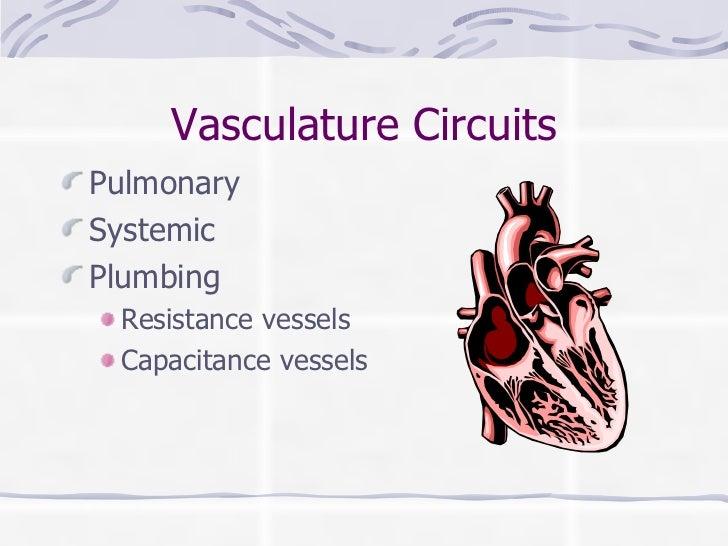 Vasculature Circuits <ul><li>Pulmonary </li></ul><ul><li>Systemic </li></ul><ul><li>Plumbing </li></ul><ul><ul><li>Resista...