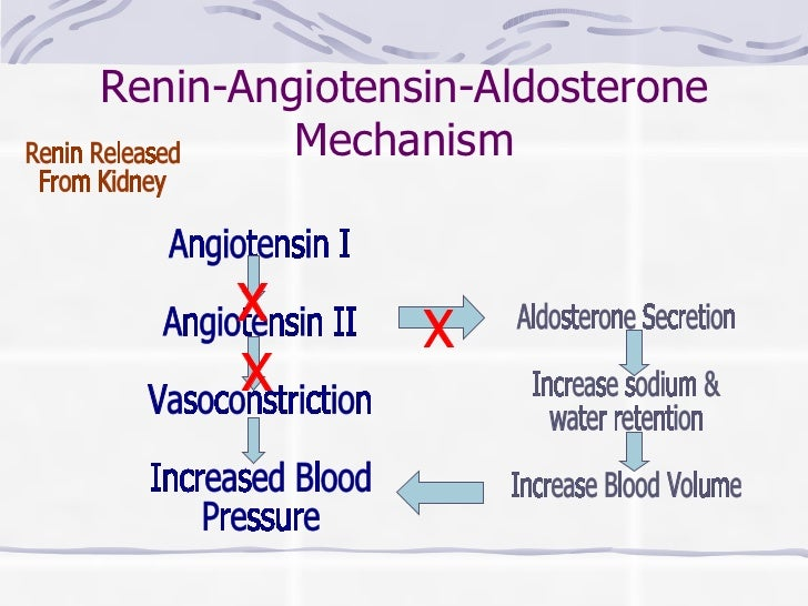 Renin-Angiotensin-Aldosterone Mechanism Angiotensin I Angiotensin II  Vasoconstriction Increased Blood Pressure Renin Rele...