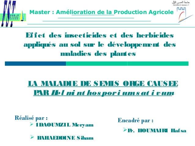 Effet des insecticides et des herbicides appliqués au sol sur le développement des maladies des plantes LA MALADIE DE SEMI...