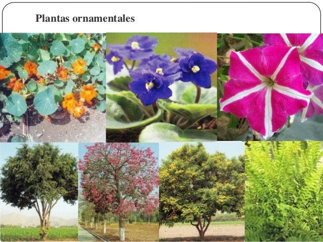 1 clase bot econ 2013 for Plantas ornamentales y medicinales