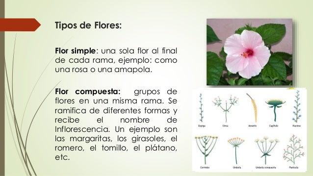 1 clase morfologia vegetal agronomia - Clases de flores y sus nombres ...