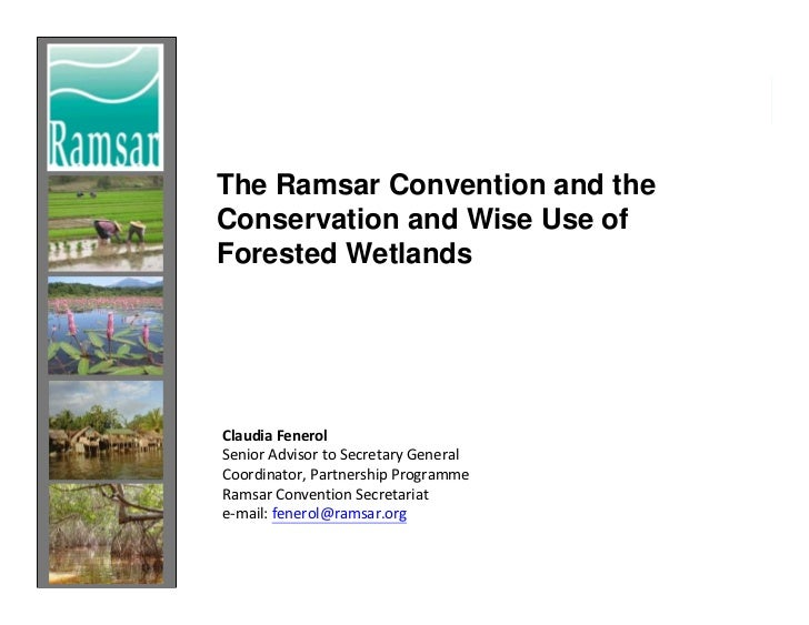 The Ramsar Convention and theConservation and Wise Use ofForested WetlandsClaudia FenerolSenior Advisor to Secretary Gener...