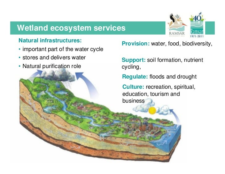 ramsar convention on wetlands of international importance pdf