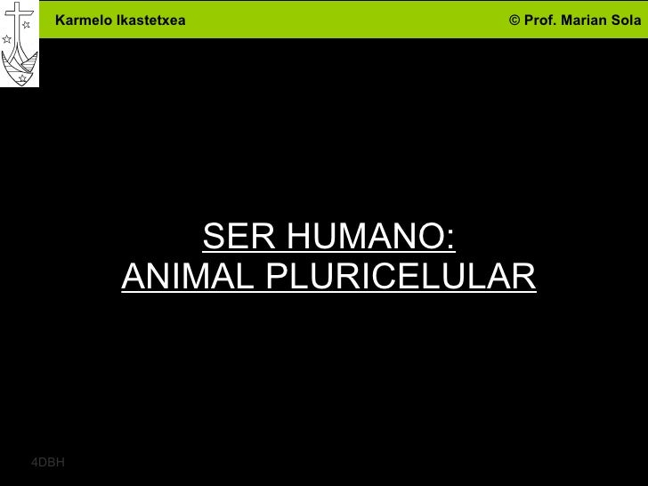 SER HUMANO: ANIMAL PLURICELULAR