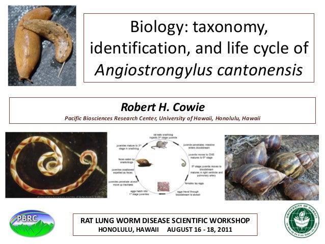 Robert H. Cowie Pacific Biosciences Research Center, University of Hawaii, Honolulu, Hawaii Biology: taxonomy, identificat...