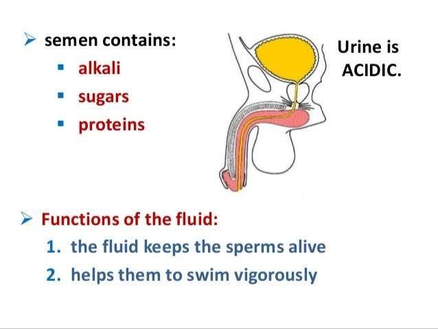 Urinateing during orgasm