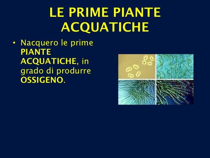 LE PRIME PIANTE ACQUATICHE <ul><li>Nacquero le prime  PIANTE ACQUATICHE , in grado di produrre  OSSIGENO . </li></ul>