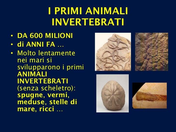 I PRIMI ANIMALI INVERTEBRATI <ul><li>DA 600 MILIONI  </li></ul><ul><li>di ANNI FA … </li></ul><ul><li>Molto lentamente nei...
