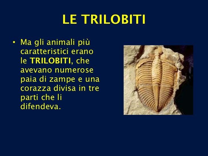 LE TRILOBITI <ul><li>Ma gli animali più caratteristici erano le  TRILOBITI , che avevano numerose paia di zampe e una cora...