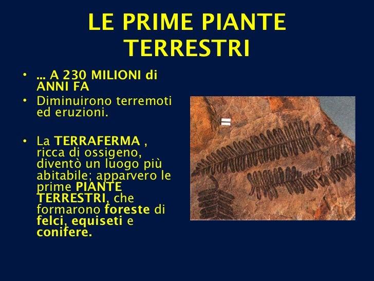 LE PRIME PIANTE TERRESTRI <ul><li>... A 230 MILIONI di ANNI FA </li></ul><ul><li>Diminuirono terremoti ed eruzioni.  </li>...