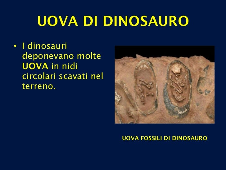 <ul><li>I dinosauri deponevano molte  UOVA  in nidi circolari scavati nel terreno.  </li></ul>UOVA DI DINOSAURO UOVA FOSSI...