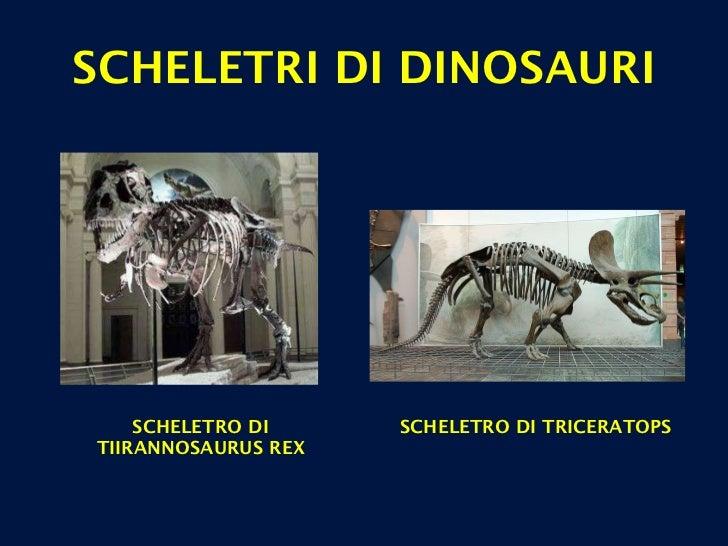 SCHELETRI DI DINOSAURI SCHELETRO DI TIIRANNOSAURUS REX SCHELETRO DI TRICERATOPS