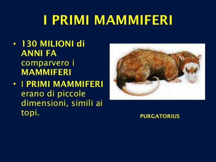 I PRIMI MAMMIFERI <ul><li>130 MILIONI di ANNI FA  comparvero i  MAMMIFERI </li></ul><ul><li>I  PRIMI MAMMIFERI  erano di p...