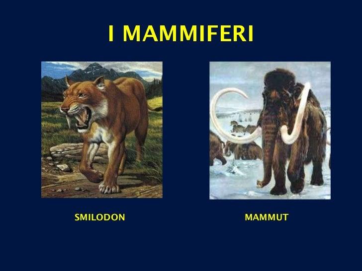 I MAMMIFERI SMILODON MAMMUT