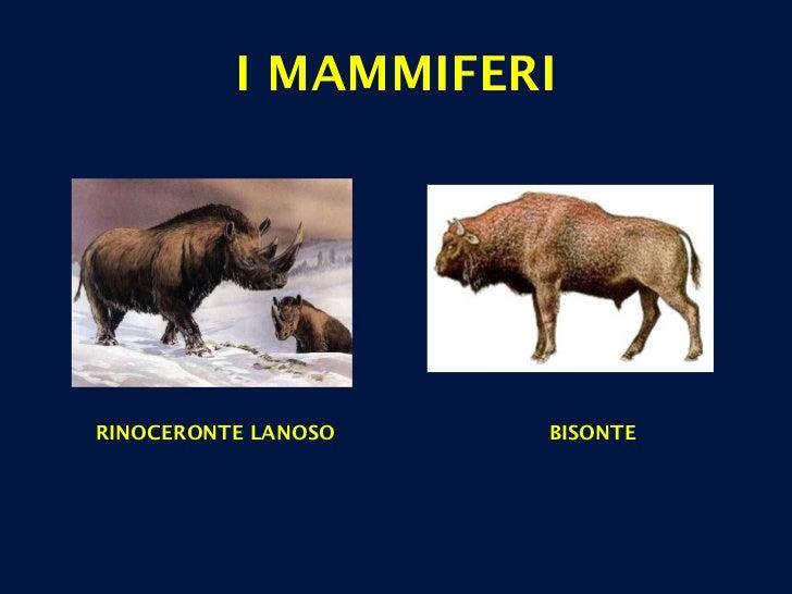 I MAMMIFERI RINOCERONTE LANOSO BISONTE