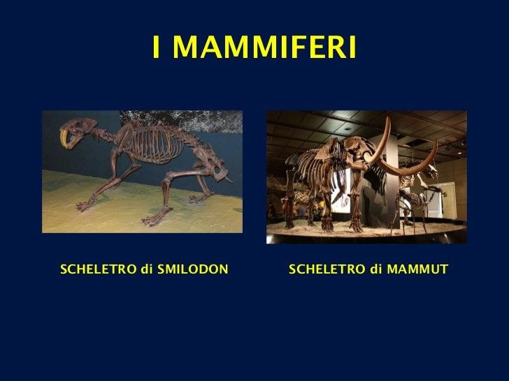 I MAMMIFERI SCHELETRO di SMILODON SCHELETRO di MAMMUT