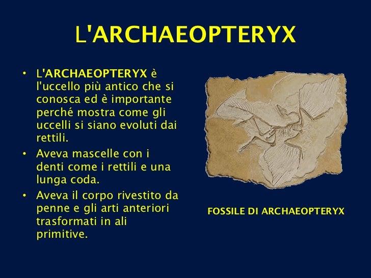L 'ARCHAEOPTERYX <ul><li>L 'ARCHAEOPTERYX  è l'uccello più antico che si conosca ed è importante perché mostra come gli uc...
