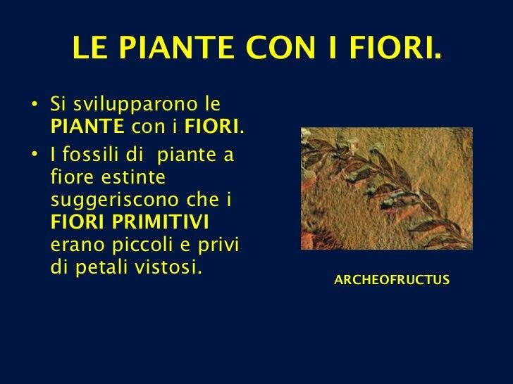 LE PIANTE CON I FIORI. <ul><li>Si svilupparono le  PIANTE  con i  FIORI .  </li></ul><ul><li>I fossili di  piante a fiore ...