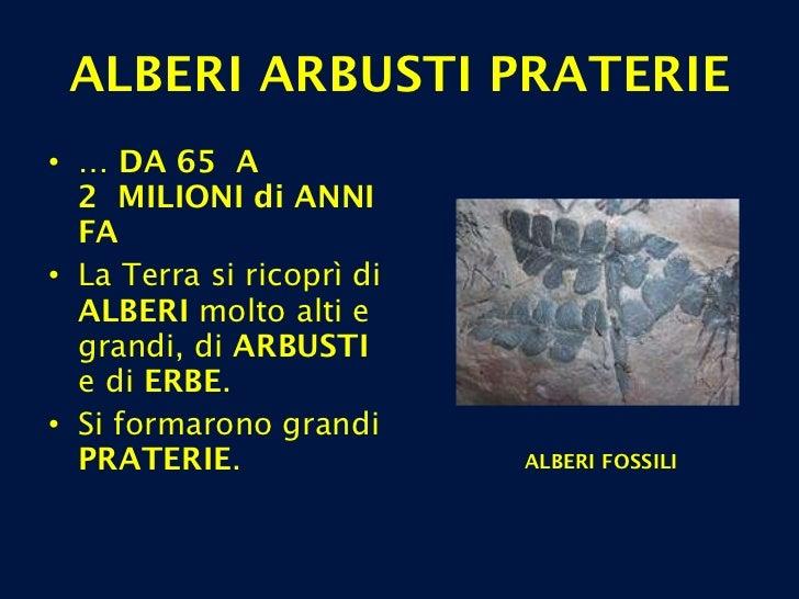 ALBERI ARBUSTI PRATERIE <ul><li>…  DA 65  A  2  MILIONI di ANNI FA </li></ul><ul><li>La Terra si ricoprì di  ALBERI  molto...