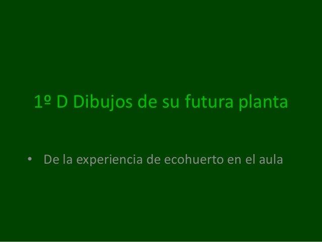 1º D Dibujos de su futura planta • De la experiencia de ecohuerto en el aula