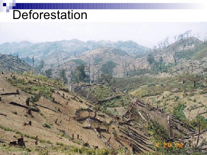 the effects of deforestation on our