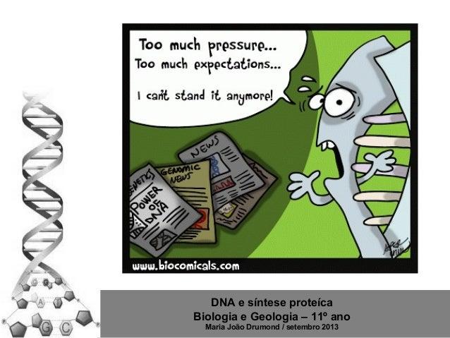 DNA e síntese proteíca Biologia e Geologia – 11º ano Maria João Drumond / setembro 2013