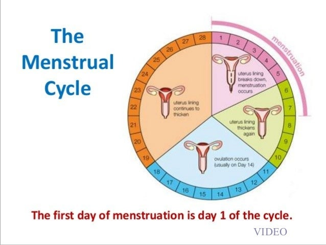 Biology form 5 chapter 4 41d menstrual cycle hormones 15 ccuart Image collections