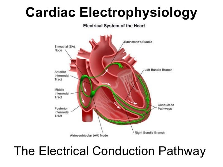 Outside Heart Anatomy Diagram Free Wiring Diagram For You