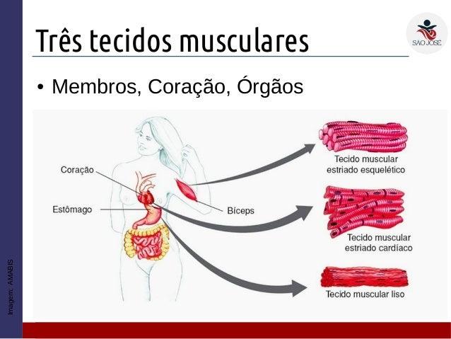 TECIDOS MUSCULARES PDF