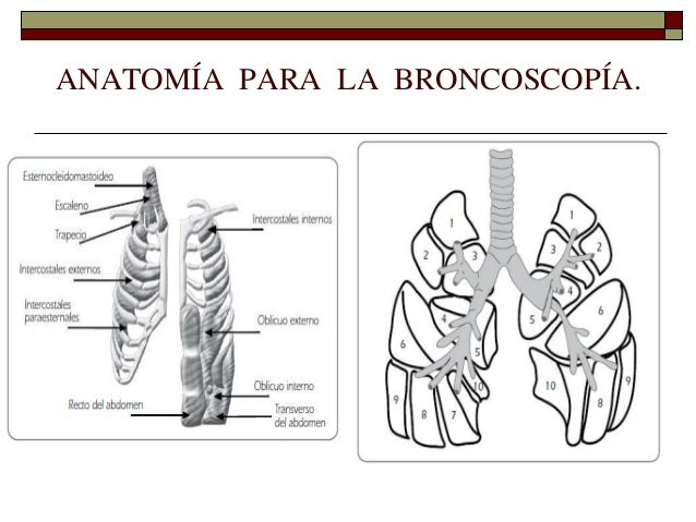 Anatomia y Embriologia Aparato Respiratorio