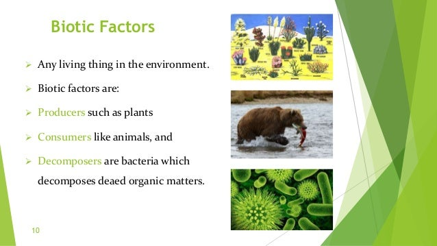 Biotic Factors  Any living thing in the environment.  Biotic factors are:  Producers such as plants  Consumers like an...